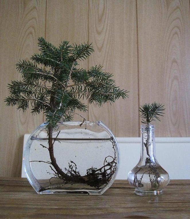 Weihnachtsbonsais_im_Glas